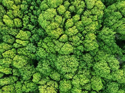 Biomass-to-Liquid of Waste-to-Liquid